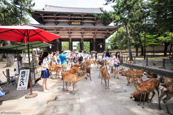 Nara Park and the deers