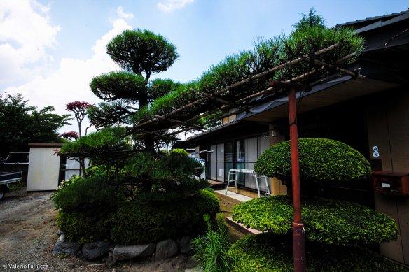 JapanBlogVale-38