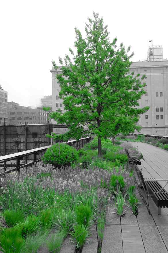 New York Blog - 34